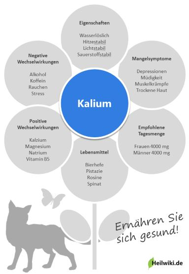 Kalium Infografik