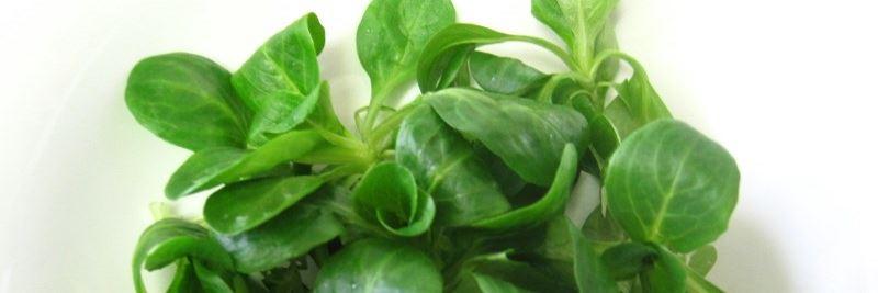 Vitamine: Feldsalat