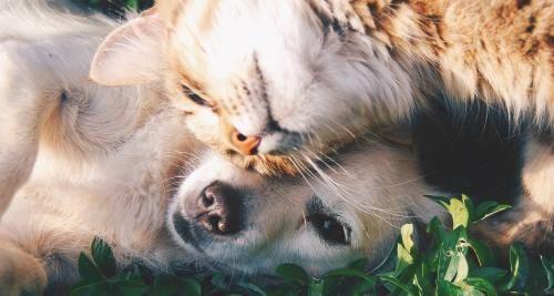Vitamine für Tiere: Hund und Katze