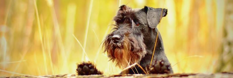 Vitamin D für den Hund