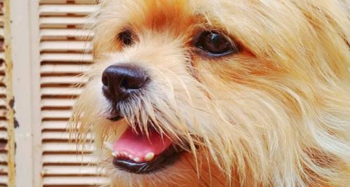 Vitamin E für den Hund