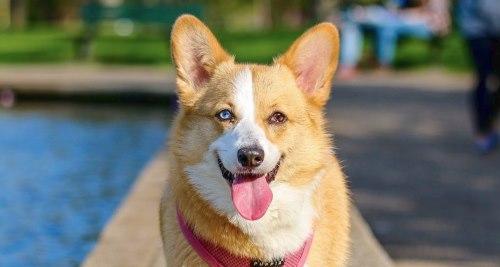 Vitamin A für den Hund