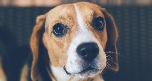 Vitamin B1 für den Hund