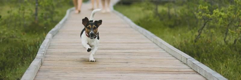 Vitamin B5 für den Hund