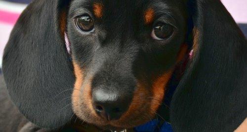 Vitamin B6 für den Hund