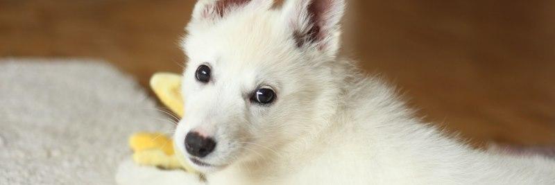 Vitamin B7 für den Hund