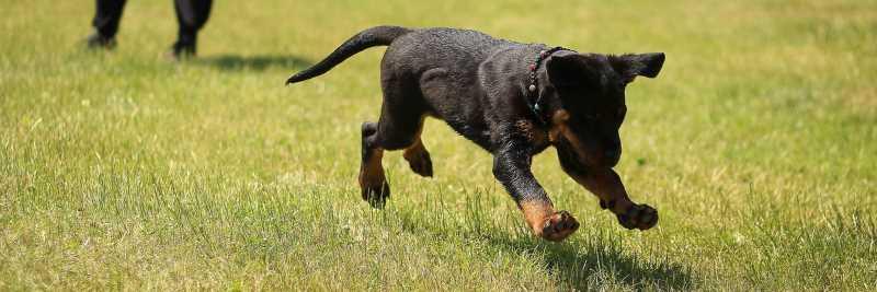 Vitamin B9 für den Hund