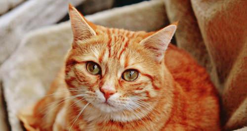 Vitamin B1 für die Katze