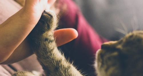 Vitamin B2 für die Katze