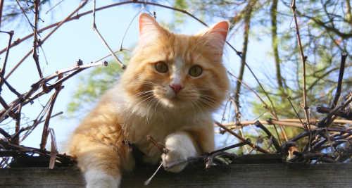 Vitamin B5 für die Katze