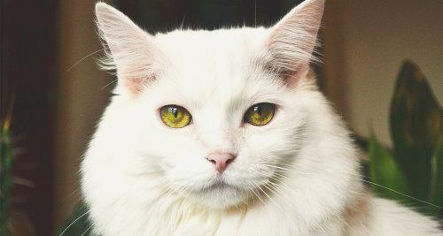 Vitamin B7 für die Katze