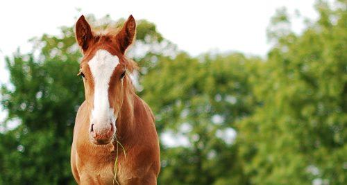 Vitamine für Tiere: Pferd