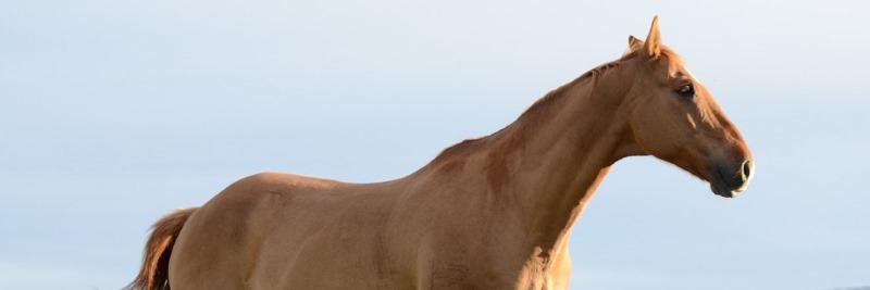 Vitamin C für das Pferd