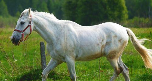 Vitamin D für das Pferd