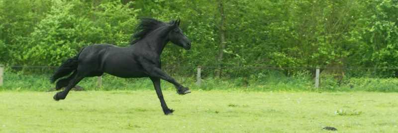 Vitamin E für das Pferd