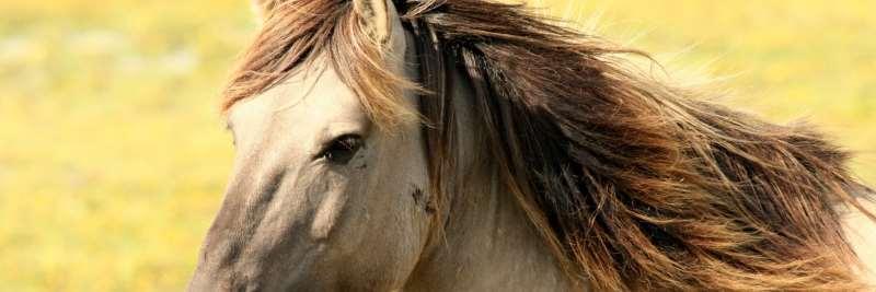 Vitamin A für das Pferd