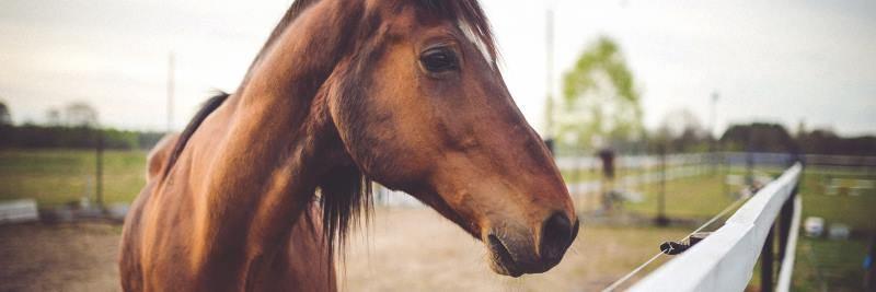 Vitamin B1 für das Pferd