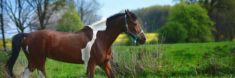 Vitamin B3 für das Pferd
