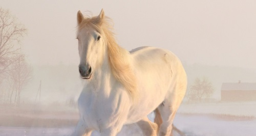 Vitamin B7 für das Pferd