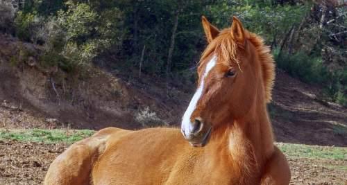 Vitamin B9 für das Pferd