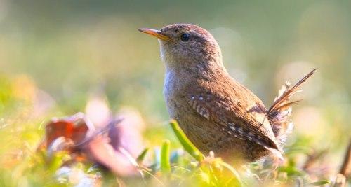 Vitamine für Vögel