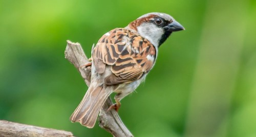 Vitamin A für Vögel