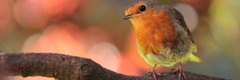 Vitamin B1 für Vögel