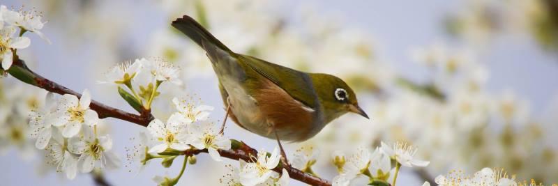 Vitamin B2 für Vögel